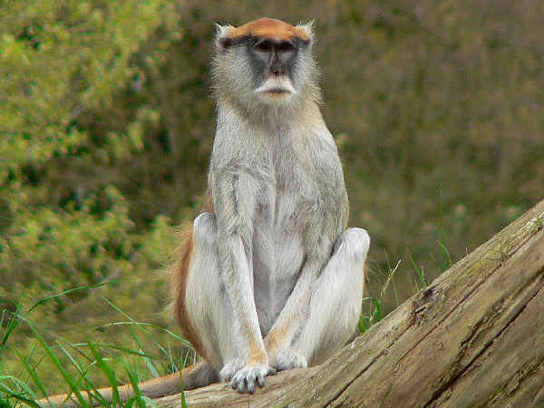 picture of a monkey sitting on a tree branch