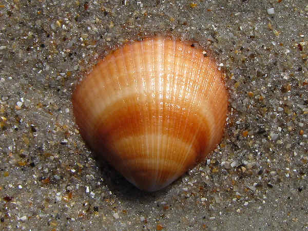 picture of a shell on a sandy beach
