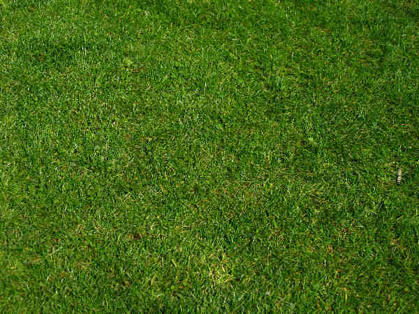 picture of a green grass yard