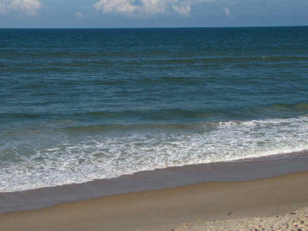 picture of Cape Canavaral National Seashore, part of the Florida wildlife pictures section