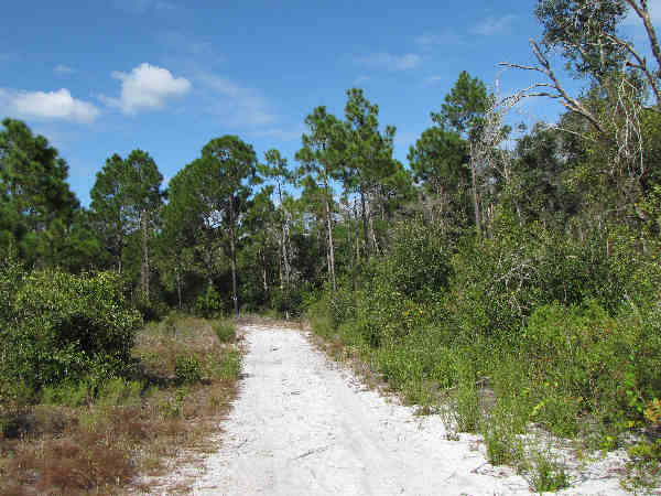 picture of a sandy trail