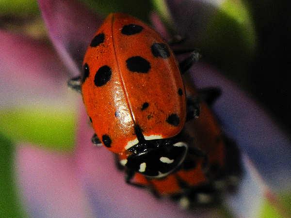 ladybug picture