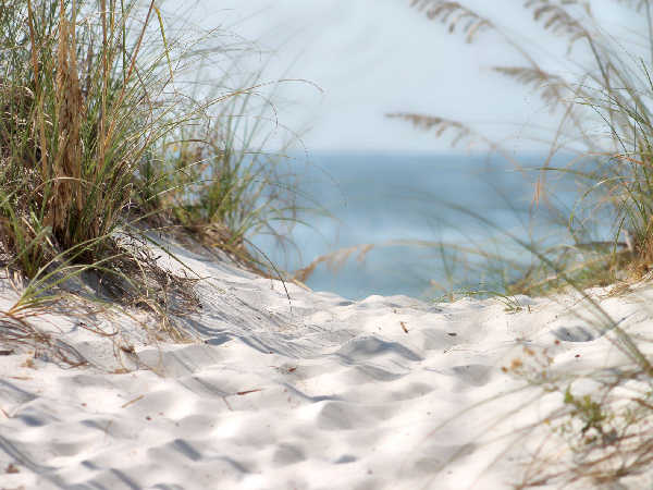 picture of an Alabama beach, part of the Alabama wildlife section